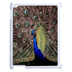 Multi Colored Peacock Apple iPad 2 Case (White)