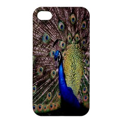 Multi Colored Peacock Apple iPhone 4/4S Hardshell Case