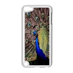 Multi Colored Peacock Apple iPod Touch 5 Case (White)