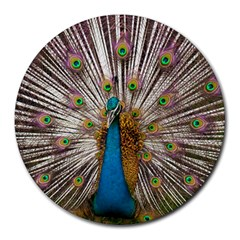 Indian Peacock Plumage Round Mousepads