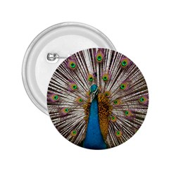 Indian Peacock Plumage 2.25  Buttons