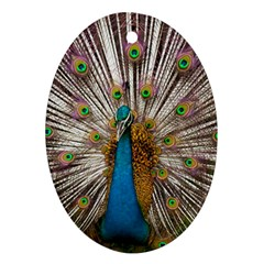 Indian Peacock Plumage Ornament (Oval)