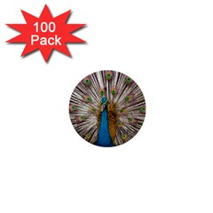 Indian Peacock Plumage 1  Mini Buttons (100 pack)