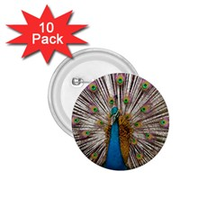 Indian Peacock Plumage 1.75  Buttons (10 pack)