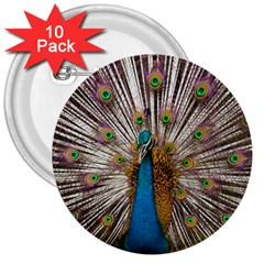 Indian Peacock Plumage 3  Buttons (10 Pack)