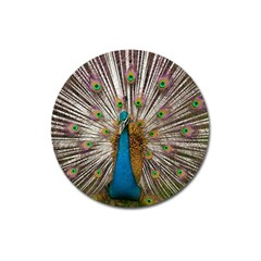 Indian Peacock Plumage Magnet 3  (Round)