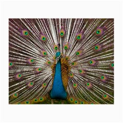 Indian Peacock Plumage Small Glasses Cloth
