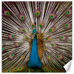 Indian Peacock Plumage Canvas 12  x 12