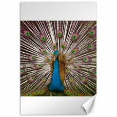 Indian Peacock Plumage Canvas 20  x 30