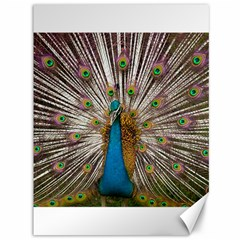 Indian Peacock Plumage Canvas 36  x 48