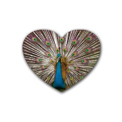 Indian Peacock Plumage Heart Coaster (4 Pack)