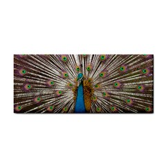 Indian Peacock Plumage Cosmetic Storage Cases
