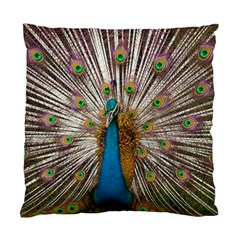Indian Peacock Plumage Standard Cushion Case (Two Sides)