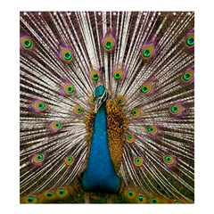 Indian Peacock Plumage Shower Curtain 66  X 72  (large)