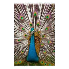 Indian Peacock Plumage Shower Curtain 48  x 72  (Small)
