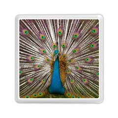 Indian Peacock Plumage Memory Card Reader (square)