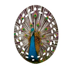 Indian Peacock Plumage Oval Filigree Ornament (Two Sides)