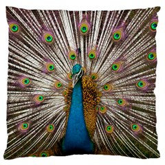 Indian Peacock Plumage Large Cushion Case (Two Sides)
