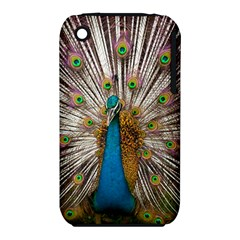 Indian Peacock Plumage Iphone 3s/3gs