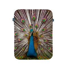 Indian Peacock Plumage Apple iPad 2/3/4 Protective Soft Cases