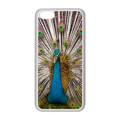 Indian Peacock Plumage Apple iPhone 5C Seamless Case (White)