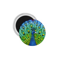 Peacock Bird Animation 1 75  Magnets