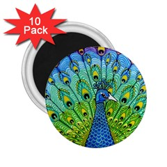 Peacock Bird Animation 2 25  Magnets (10 Pack)