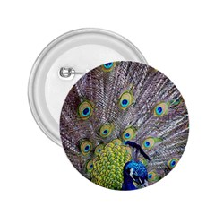 Peacock Bird Feathers 2 25  Buttons