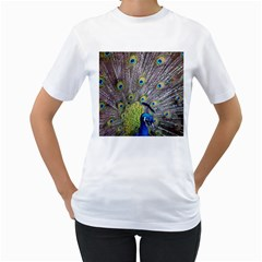 Peacock Bird Feathers Women s T Shirt (white) (two Sided)