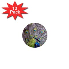 Peacock Bird Feathers 1  Mini Magnet (10 Pack)