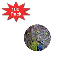 Peacock Bird Feathers 1  Mini Buttons (100 pack)
