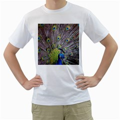 Peacock Bird Feathers Men s T Shirt (white) (two Sided)