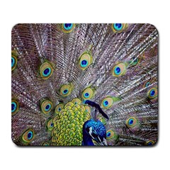 Peacock Bird Feathers Large Mousepads