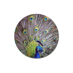Peacock Bird Feathers Magnet 3  (Round)