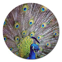 Peacock Bird Feathers Magnet 5  (Round)