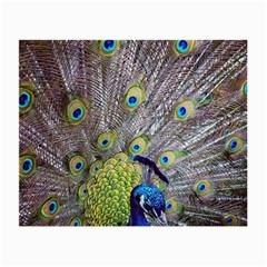 Peacock Bird Feathers Small Glasses Cloth
