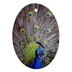 Peacock Bird Feathers Oval Ornament (Two Sides)