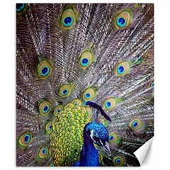 Peacock Bird Feathers Canvas 8  X 10