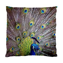 Peacock Bird Feathers Standard Cushion Case (one Side)
