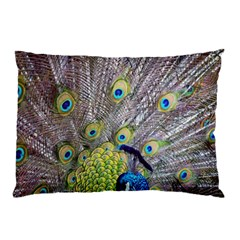 Peacock Bird Feathers Pillow Case (two Sides)