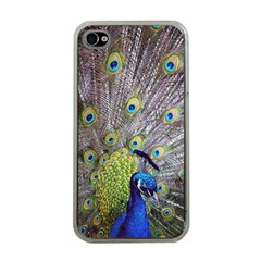 Peacock Bird Feathers Apple Iphone 4 Case (clear)
