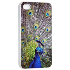 Peacock Bird Feathers Apple Iphone 4/4s Seamless Case (white)