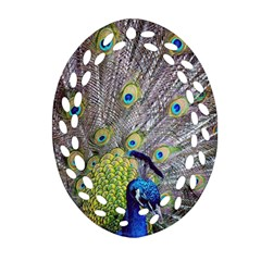 Peacock Bird Feathers Ornament (Oval Filigree)