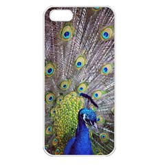 Peacock Bird Feathers Apple iPhone 5 Seamless Case (White)