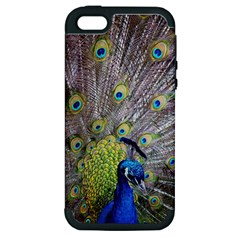 Peacock Bird Feathers Apple iPhone 5 Hardshell Case (PC+Silicone)