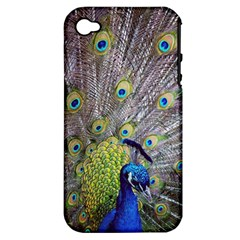 Peacock Bird Feathers Apple iPhone 4/4S Hardshell Case (PC+Silicone)