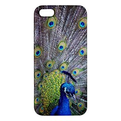 Peacock Bird Feathers iPhone 5S/ SE Premium Hardshell Case