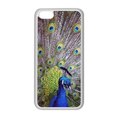 Peacock Bird Feathers Apple iPhone 5C Seamless Case (White)