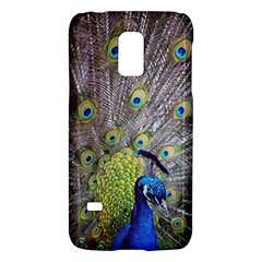 Peacock Bird Feathers Galaxy S5 Mini
