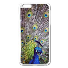 Peacock Bird Feathers Apple iPhone 6 Plus/6S Plus Enamel White Case